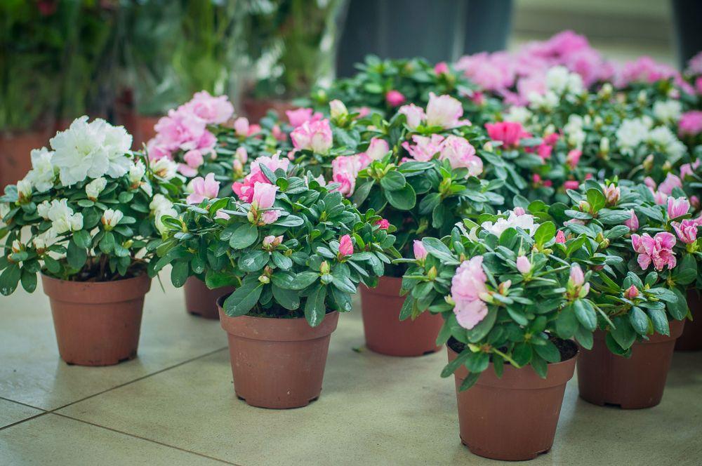 Горшечные цветы не цветущие фото и названия